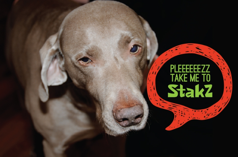 05-please-take-me-to-stakz-dog